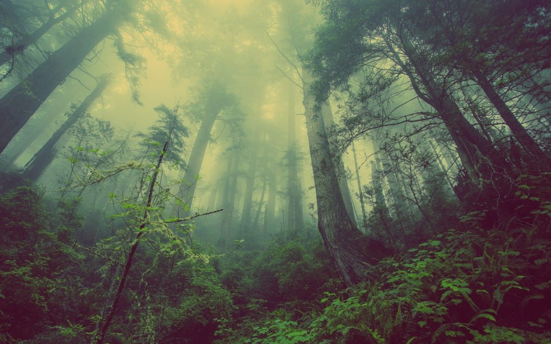 Planting Trees by the Billion can Aid in CO2 Reduction